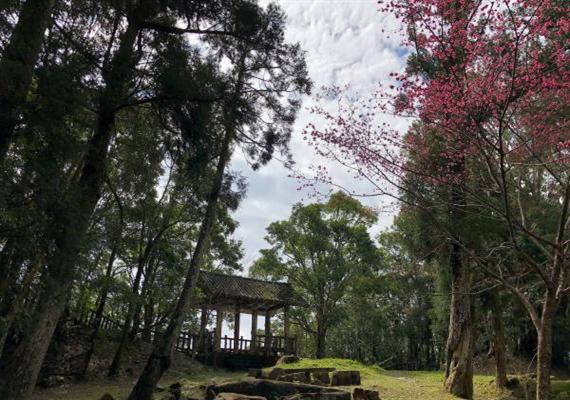 雙遊國家森林公園一日:東眼山+滿月圓